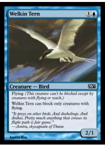 Welkin Tern