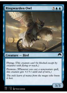 Ringwarden Owl