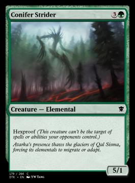 Conifer Strider